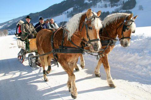 Pferdeschlittenfahrten - Winterurlaub in der Urlaubsregion Schladming-Dachstein